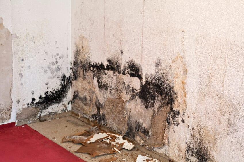 Mold Restoration Company