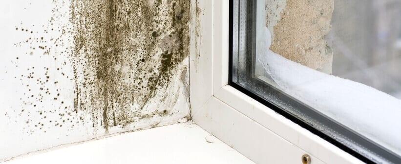 black mold problem next to a window