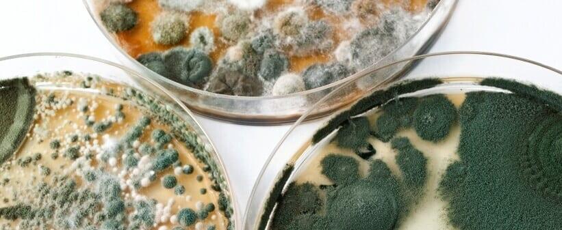 prevent mold: Petri dishes